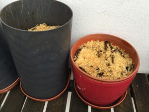 The final stage of my composting